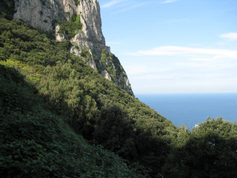 Forests of Capri